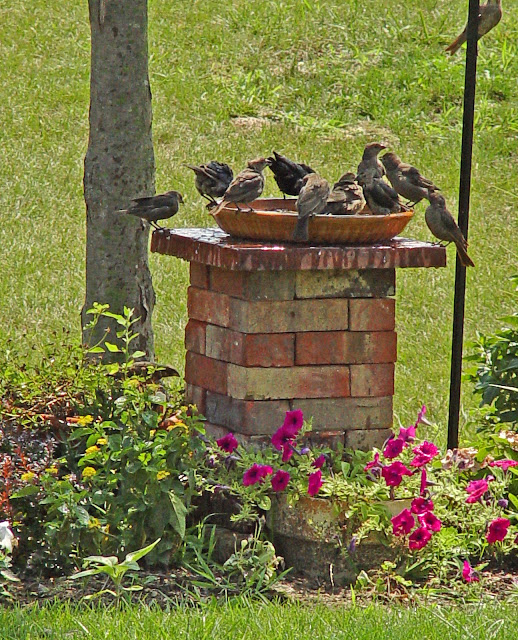 birdbath stand