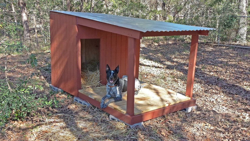Country Dog House with Porch