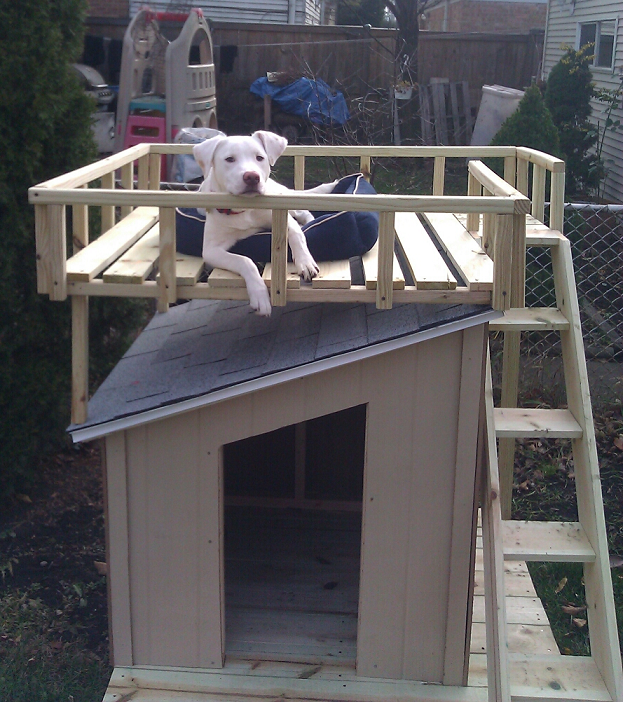 Dog House with Roof Top Deck