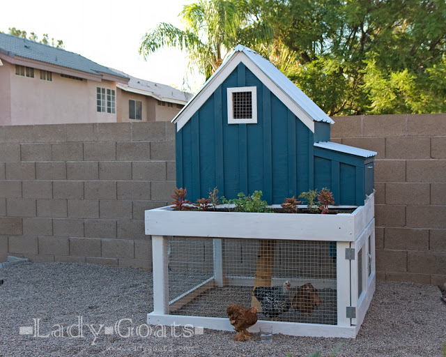 Small Chicken Coop with Planter