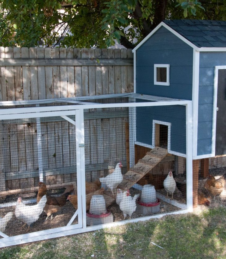 Small Modern Homemade Chicken Coop