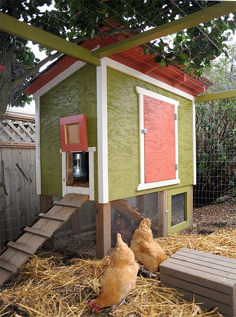 Urban Chicken Coop Plan