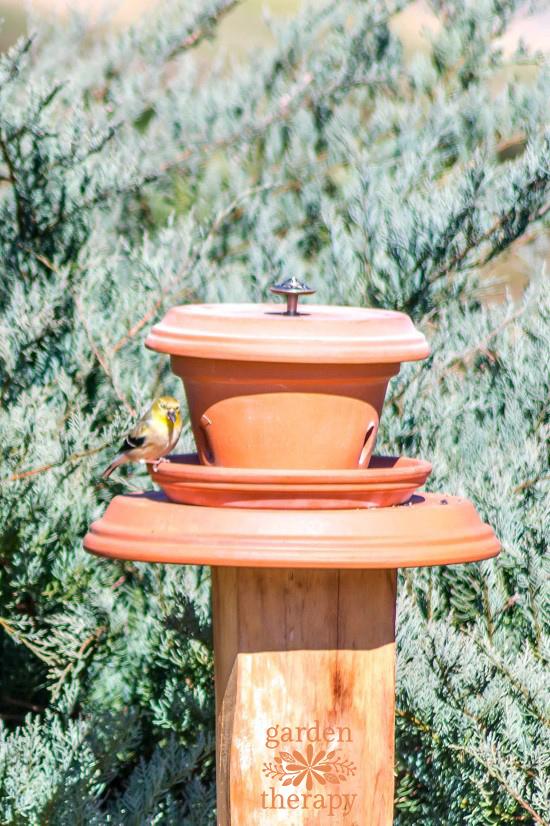 Flowerpot Bird Feeder