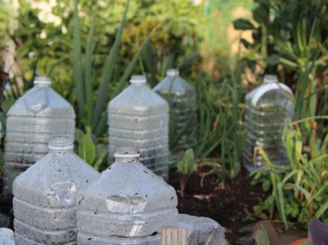 bottle greenhouses