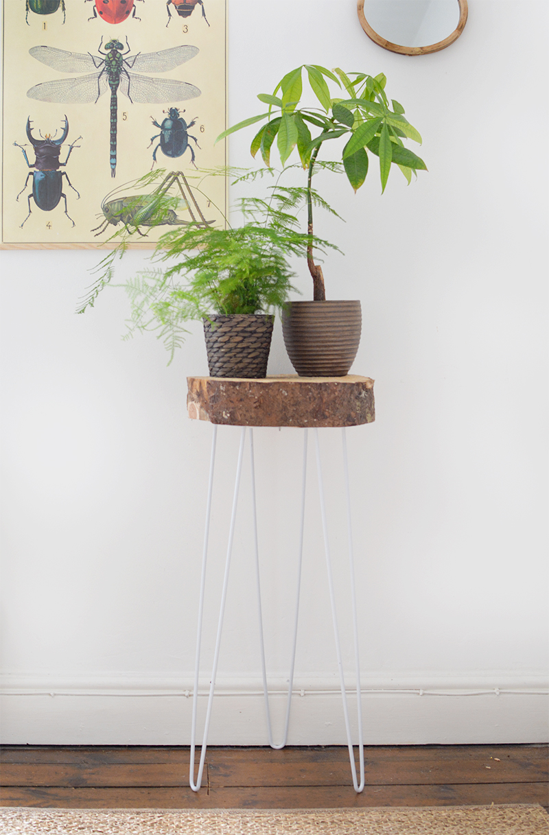 Hairpin Leg and Wood Slice Plant Stand